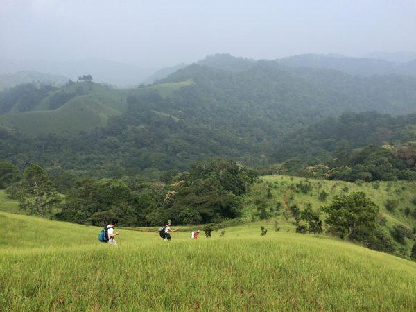Kết quả hình ảnh cho Cung đường trekking qua rừng thông lớn nhất Việt Nam