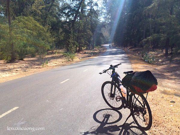 Con đường ven biển Phan Rí xuyên qua rừng dương, tuyệt đẹp.