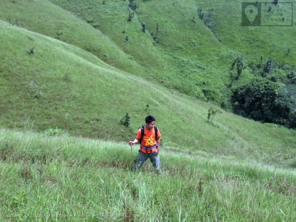 Màu cỏ xanh ở Tà Năng. Toạ độ: 11.517, 108.558
