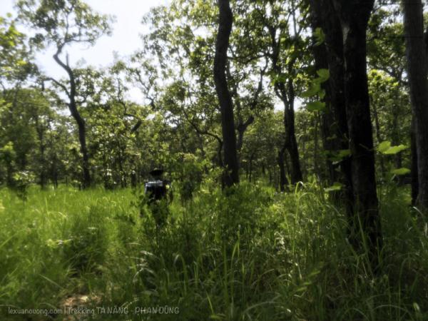 Rừng Phan Dũng với cỏ xanh mướt ngang hông, toạ độ là: 11.448, 108.605