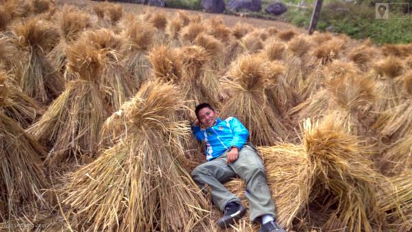 Mùa gặt vừa xong trên cung đường Pắc Bó - Trà Lĩnh - Trùng Khánh.