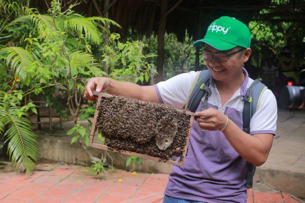 Mật ong Pha Trà sẽ được lấy từ các tổ ong nuôi như thế này. Ong này không cắn, chỉ đốt thôi.