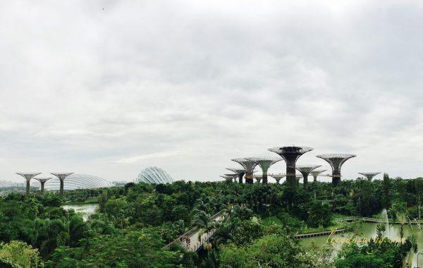 Garden By The Bay - khu vườn khổng lồ tuyệt đẹp giữa trung tâm thành phố.