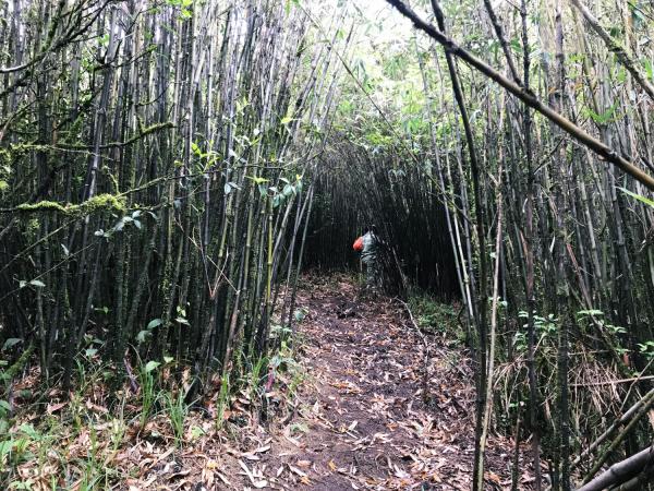 Con đường leo Bạch Mộc Lương Tử đầy phân trâu