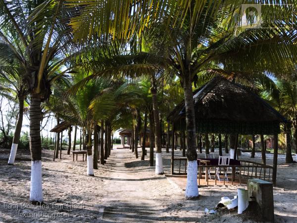 Hàng dừa trong Tam Thanh Natural Beach resort