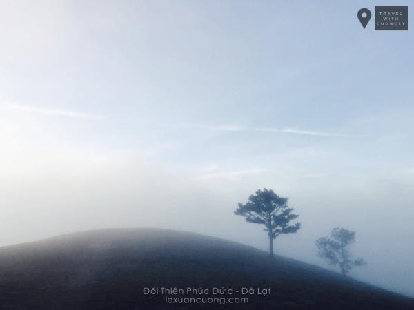 Đồi cây cô đơn Thiên Phúc Đức trong sương sớm