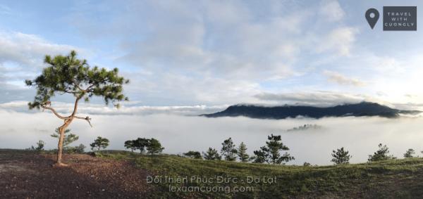 Cây thông cô đơn và biển mây trên đồi Thiên Phúc Đức, phía xa là dãy Langbiang.