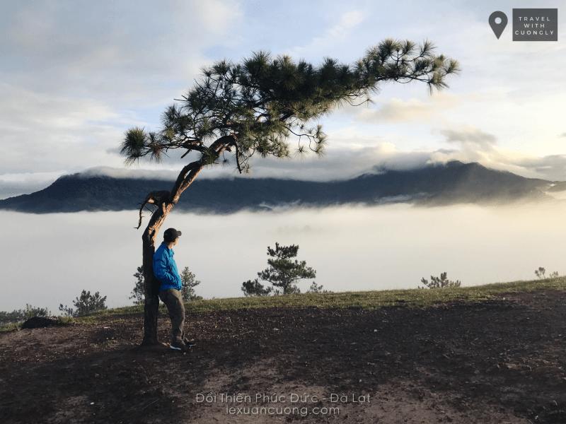 Cây cô đơn và biển mây trên đồi Thiên Phúc Đức, Đà Lạt
