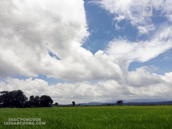 Trời xanh, mây trắng và đồng lúa xanh mát trên đường vào thác Pongour