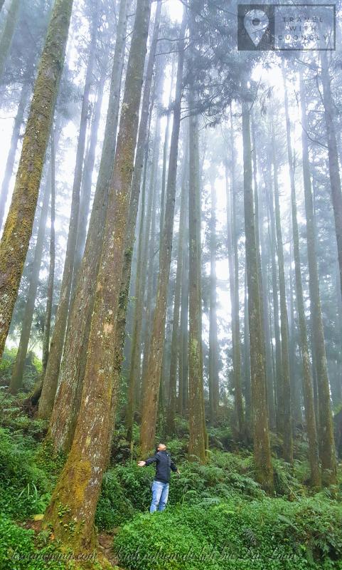 Trekking xuyên rừng Alishan.