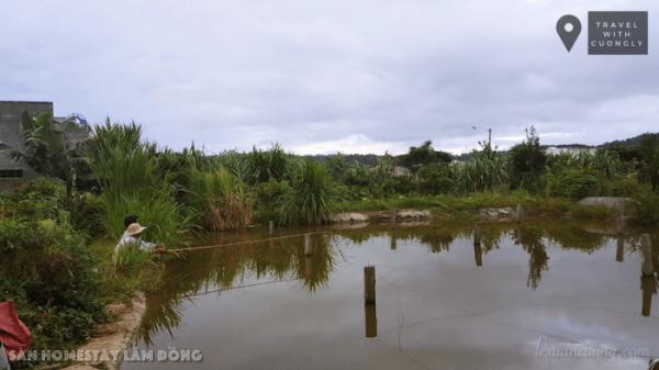 Ao cá ở Sàn homestay không quá rộng nhưng đủ cá để bạn thử tài câu cá.