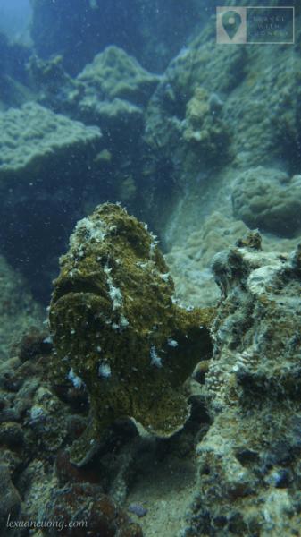 Con cá đặc biệt, trông như 1 tảng đá bất động dưới độ sâu khoảng 10m.