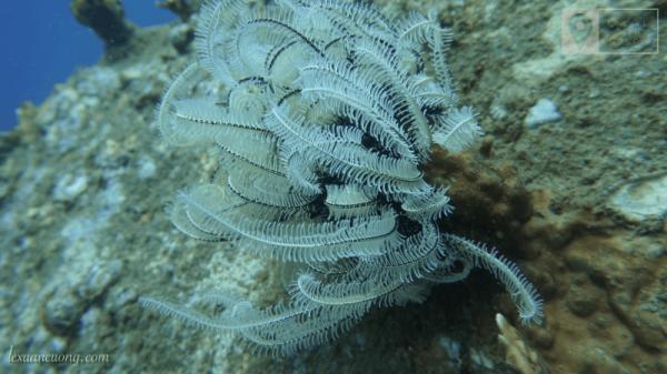 Một loại hải quỳ dưới biển.
