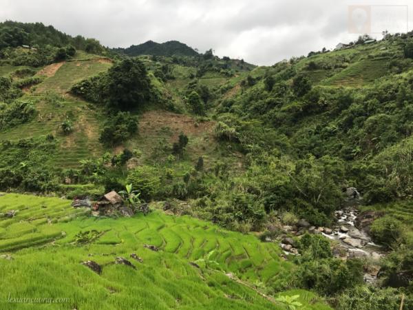 Những thửa ruộng bậc thang ở Ngọc Linh.