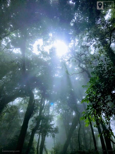 Ánh sáng lọt qua những tán cây đầy ma mị ở rừng Ngọc Linh.