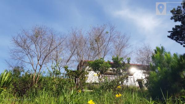 Hàng Mai Anh Đào cạnh nhà, dự kiến mùa xuân năm nay sẽ tràn ngập hoa.