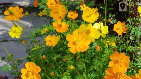 Những chậu hoa nhỏ ở Vườn Nắng Ấm.