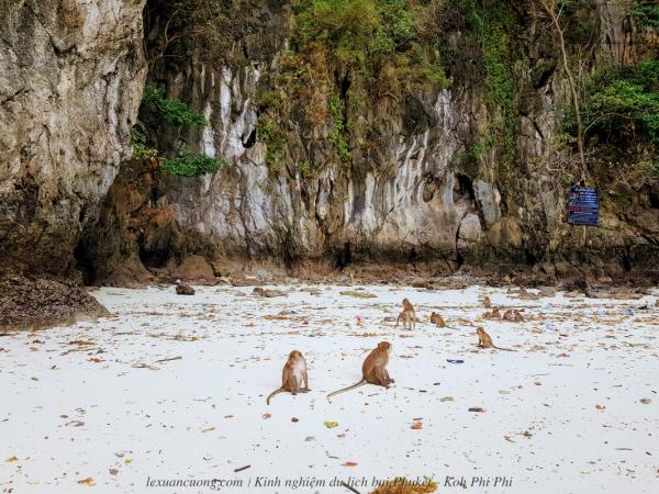 Đảo Khỉ, cũng giống Việt Nam.