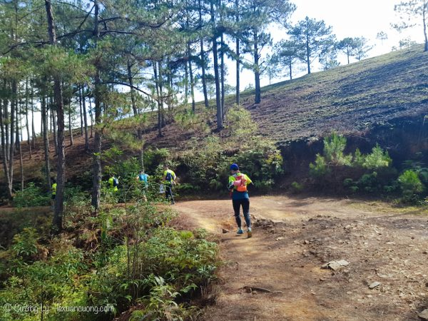 Đường chạy Đà Lạt xuyên qua những con đường mòn và đồi thông thế này.