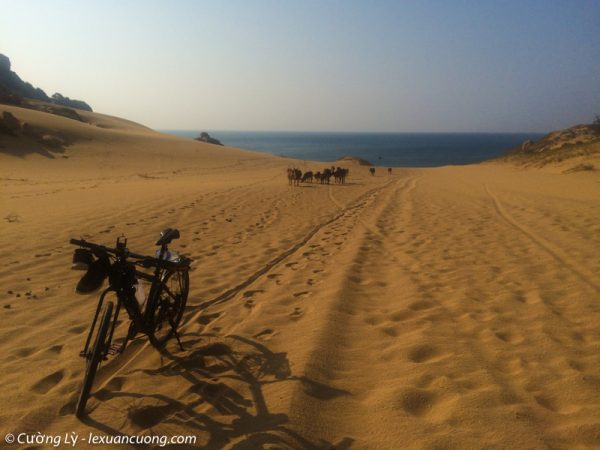 Đồi cát ở Mũi Dinh không quá cao nhưng cũng khá khó khăn.
