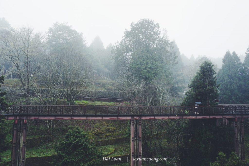 It's pretty, but beautiful, isn't it? The wooden bridges are higher than 10m in zhaoping Park