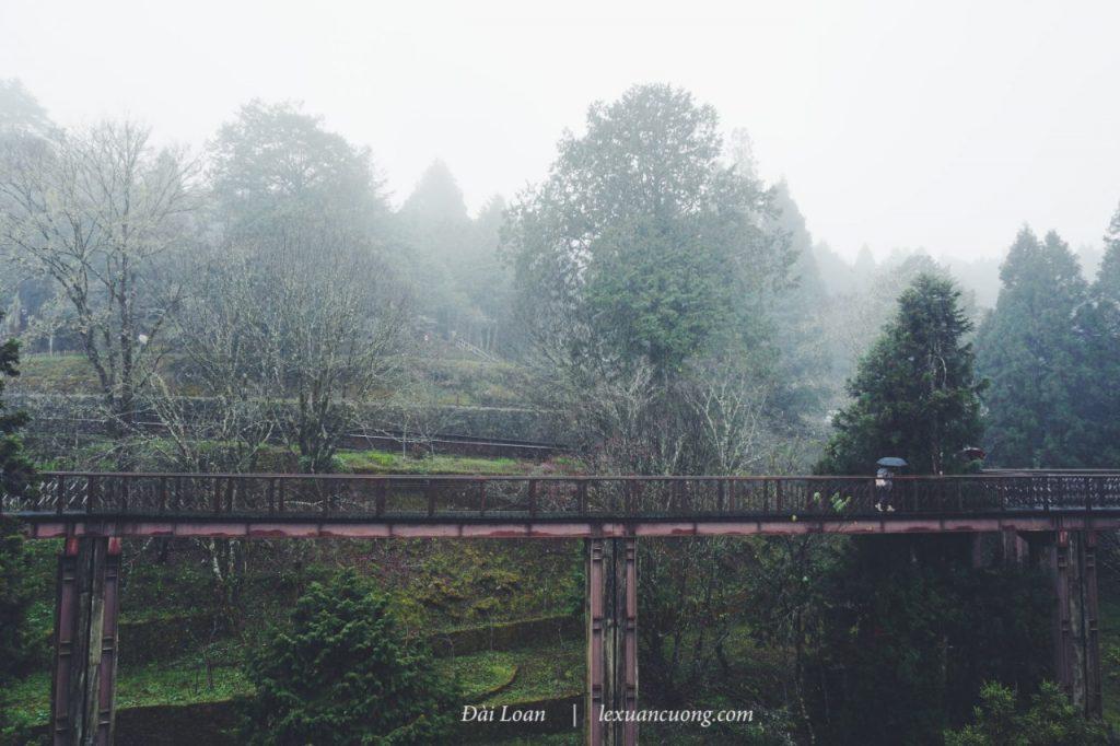 Âm u, nhưng đẹp mà đúng không? Những chiếc cầu gỗ cao hơn 10m ở Zhaoping Park