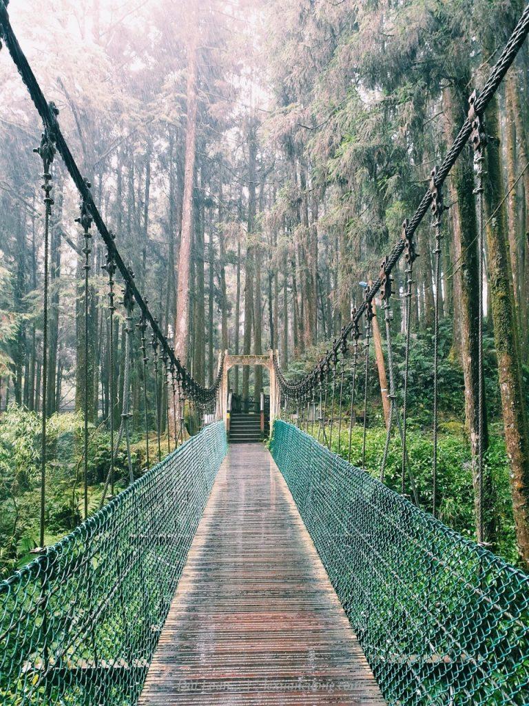 Cầu treo giữa rừng Alishan.