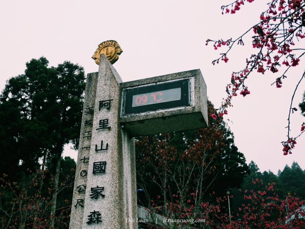 Alishan welcomes with the cold 9 degrees Celsius and drizzle.