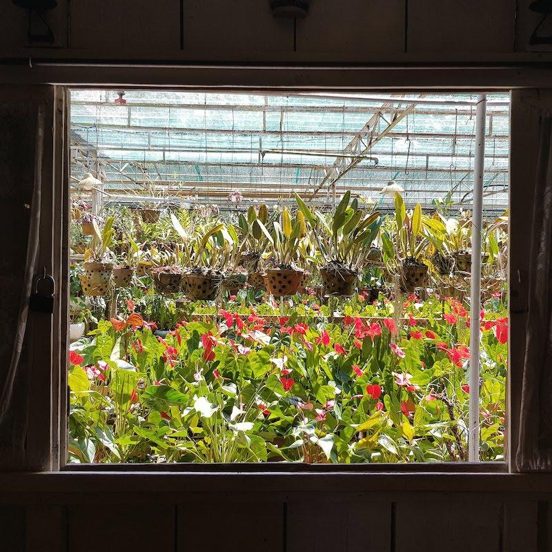 Cửa sổ nhìn ra vườn hoa của Home Cafe
