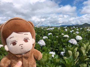 Vườn hoa Cẩm Tú Cầu ở Đà Lạt